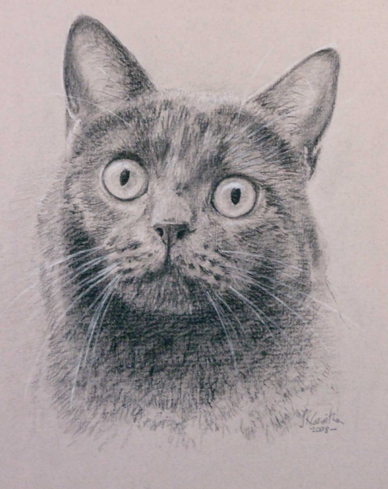 Cat portrait, drawing on paper