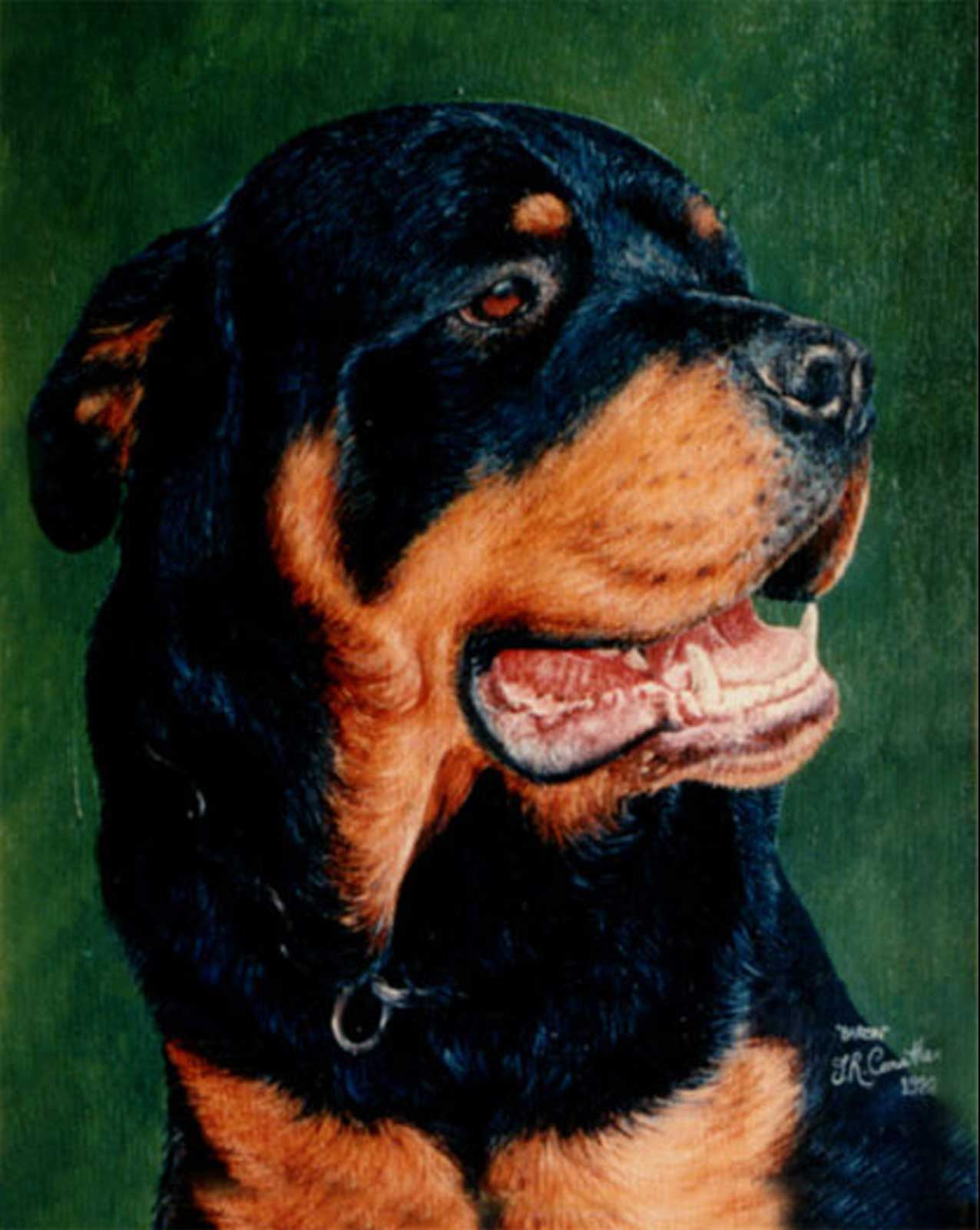 Rottweiler dog portrait oil painting on canvas