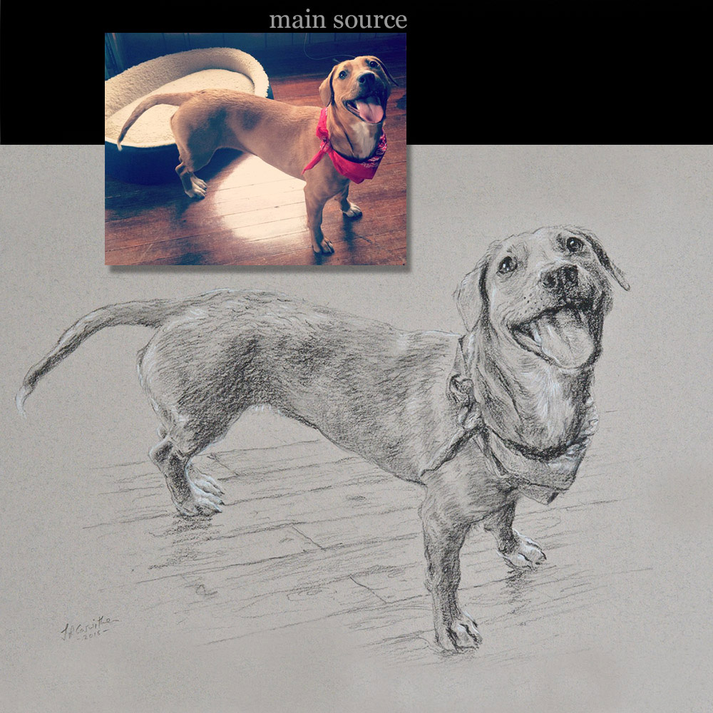 Dog13 portrait drawing - carbon pencil on paper