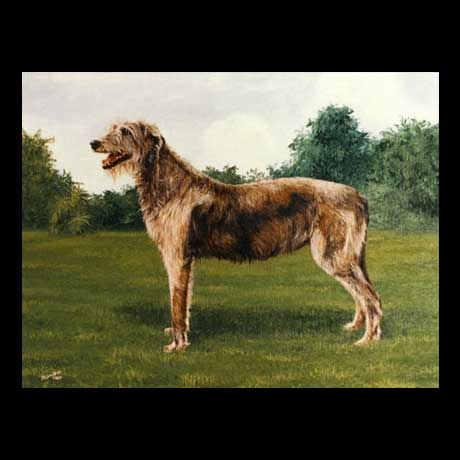 Irish Wolfhound dog portrait painting, oil paint on canvas