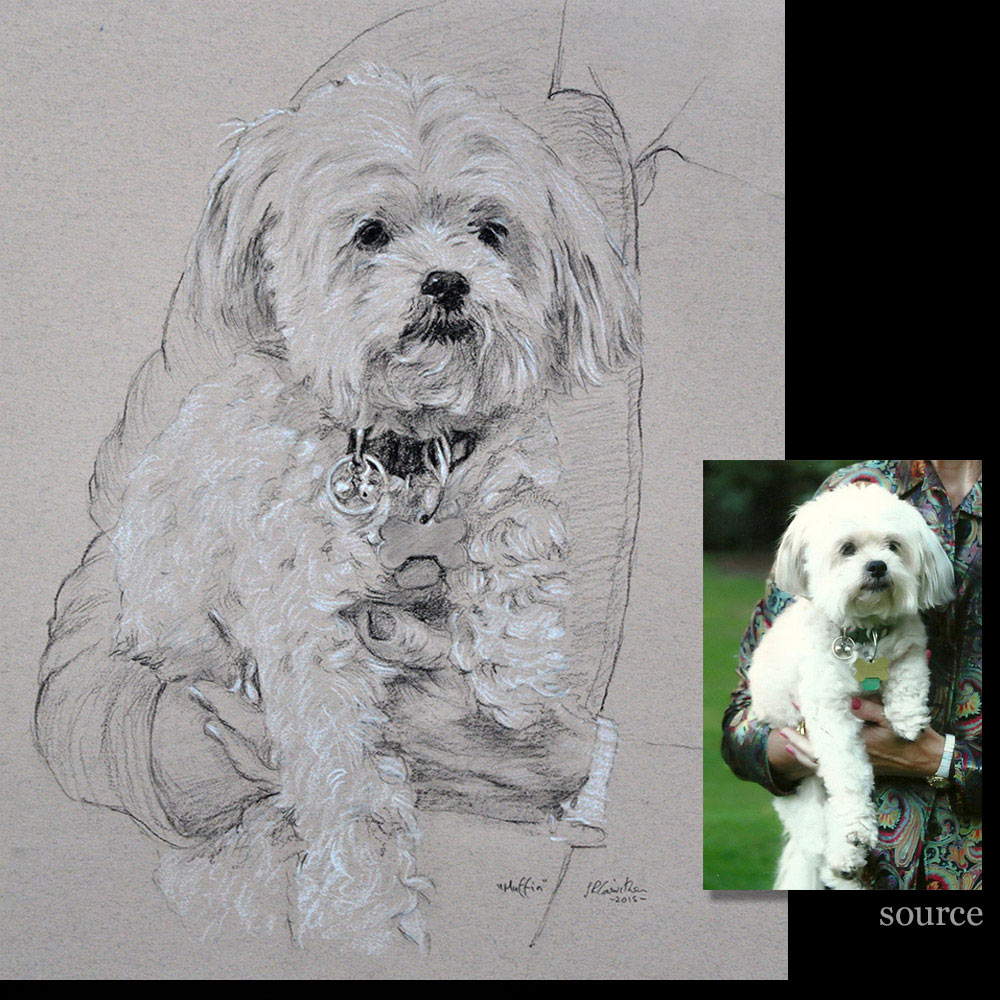 dog 14 portrait drawing detail1