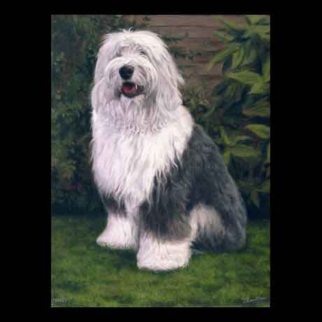 Old English Sheepdog dog portrait painting, oil paint on canvas