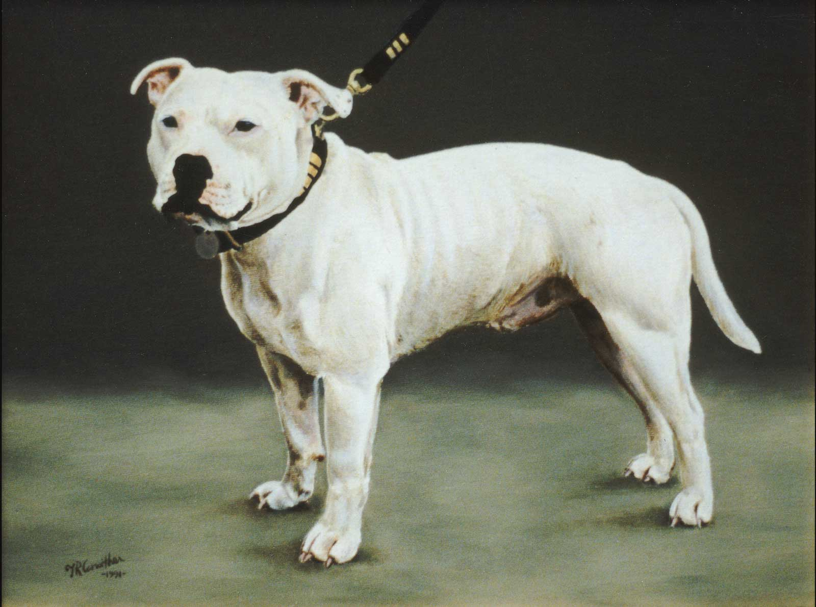Staffordshire Bull terrier dog portrait oil painting on canvas