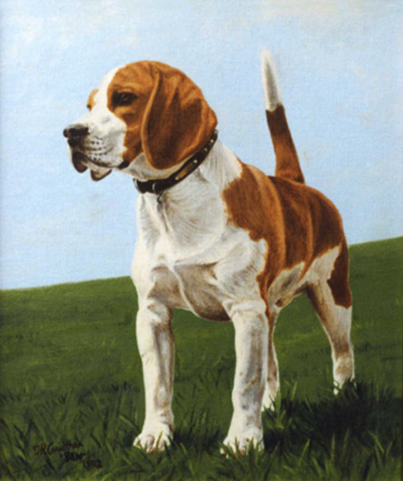 Beagle dog portrait oil painting on canvas