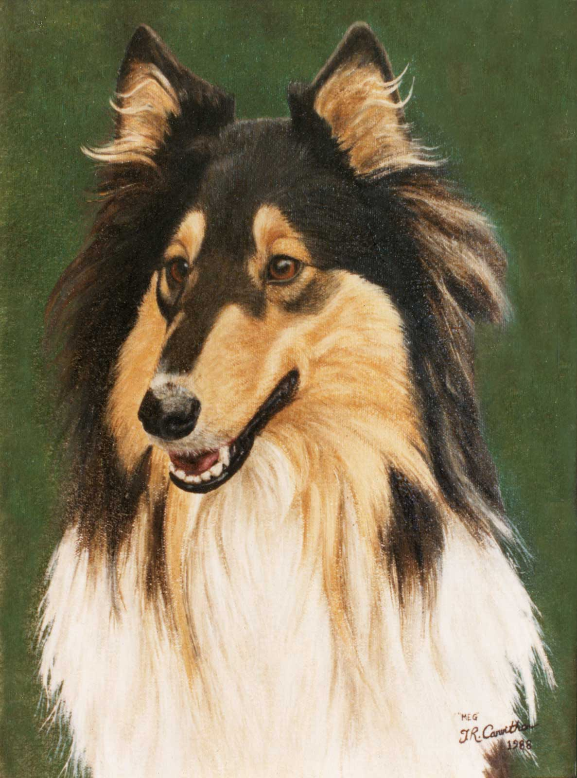 Collie dog portrait oil painting on canvas