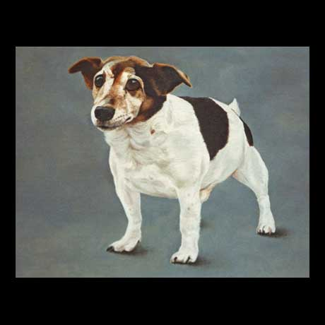 Jack Russell dog portrait painting, oil paint on canvas