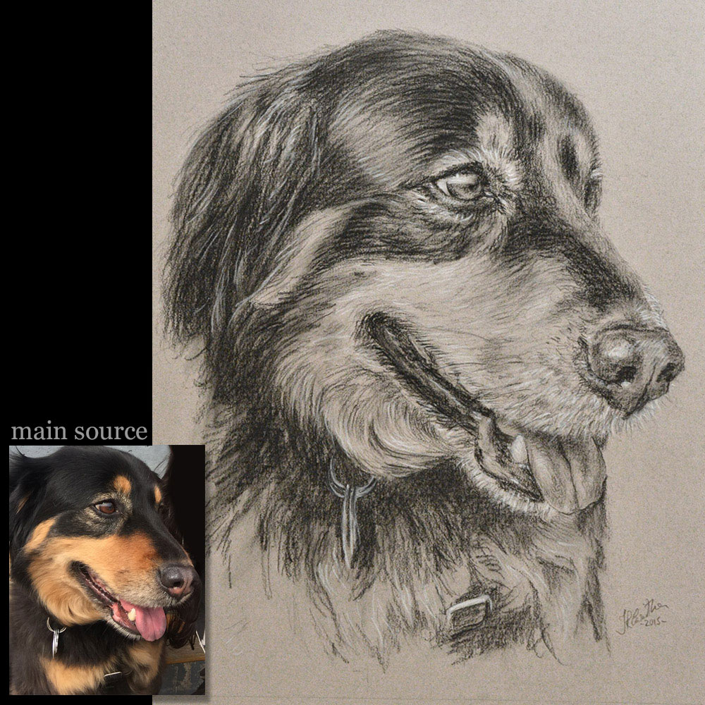 Dog portrait drawing 2
