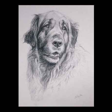 Leonberger dog portrait drawing on paper