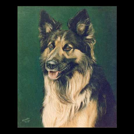 German Shepherd dog portrait painting, oil paint on canvas
