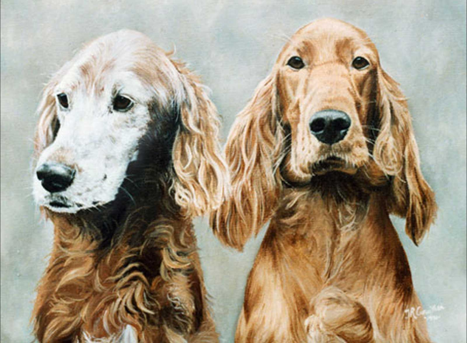Red Setter dog portraits oil painting on canvas