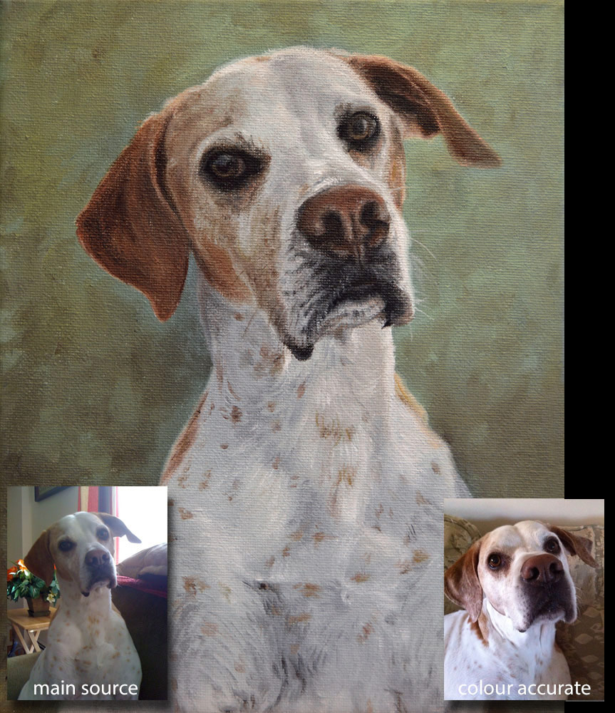 Pointer dog portrait painting 1 - oils on canvas