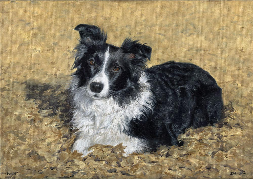 Sheepdog portrait painting dog1 - oils on canvas
