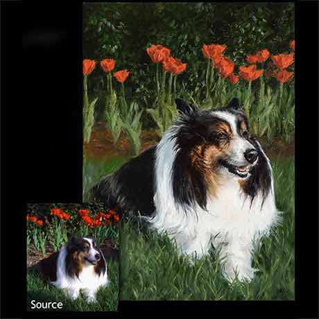 Sheltie dog portrait painting 1 - oils on canvas