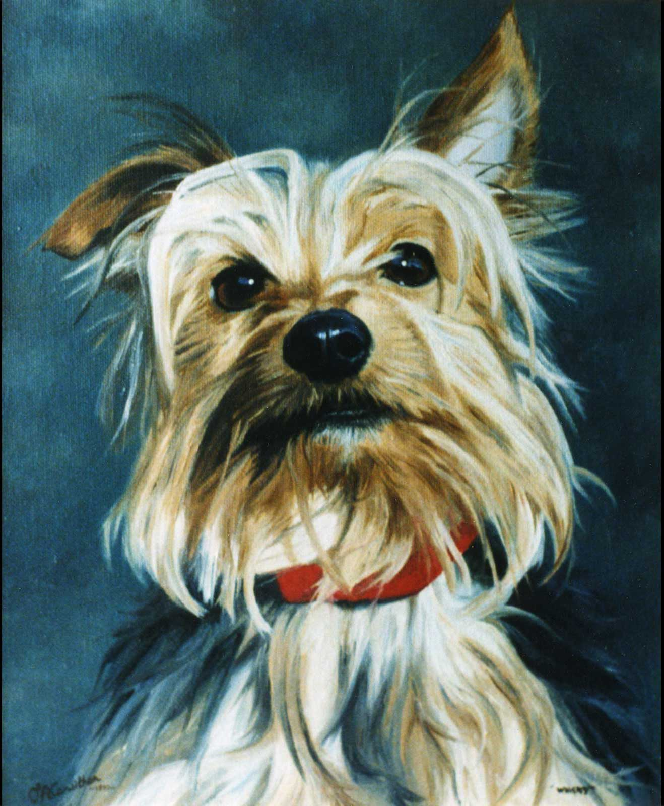 Yorkshire Terrier dog portrait oil painting on canvas