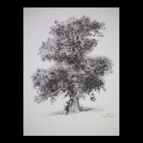 Tree drawing on paper